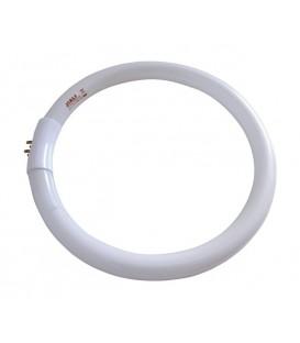 Tub neon circular T5 22W